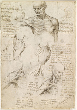 Leonardo da Vinci - Superficial anatomy of the shoulder and neck (recto) - Google Art Project