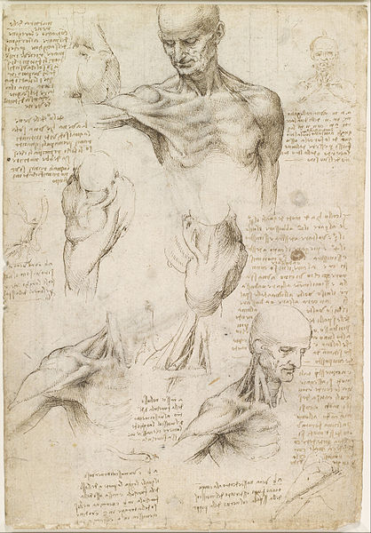File:Leonardo da Vinci - Superficial anatomy of the shoulder and neck (recto) - Google Art Project.jpg