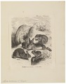 Lepus cuniculus - 1700-1880 - Print - Iconographia Zoologica - Special Collections University of Amsterdam - UBA01 IZ20600223.tif