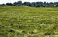 Les Plantes Cultivades. Cereals. Imatge 264.jpg