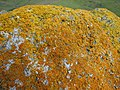 Lichen (kevincollins).jpg