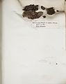 Lichenes Helvetici IX X 1833 014.jpg