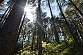 Light for the Trees, Charles Darwin Trail - panoramio.jpg