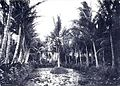 Liliy pond and coconut groves at Ainahau.jpg