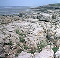 Limestone pavement at Hutchwns Point - geograph.org.uk - 996953.jpg