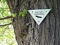 Linde auf dem Friedhof (Ostheim) 07.JPG