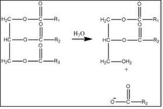 Chemical process of decomposition - Image: Lipid hydrolysis