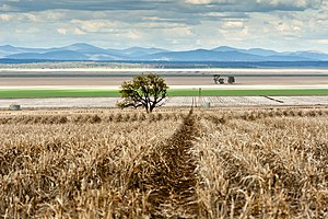 Liverpool Plains - Hay fields, Liverpool Plains