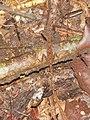 Lizard (8039310157).jpg