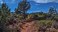 Llama Trail (39316137514).jpg