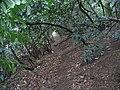 Llwybr Clawdd Wat-Wat's Dyke Way - geograph.org.uk - 325052.jpg