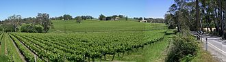 Lobethal - Vineyard on the Adelaide-Lobethal Road, just outside the township of Lobethal