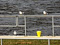 Lock and Dam 13 - Mississippi River 13.jpg
