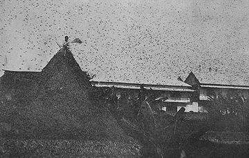 Locust Swarm in Philipines (c. 1912)