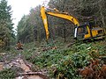 Logging in Slade Bottom, St Briavels - geograph.org.uk - 285576.jpg
