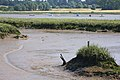 Low tide on the River Deben - geograph.org.uk - 900868.jpg