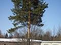 Lyovintsy, Kirovskaya oblast', Russia, 612079 - panoramio (99).jpg