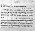 M. Baillie, A series of engravings...; 1812 Wellcome L0011679.jpg