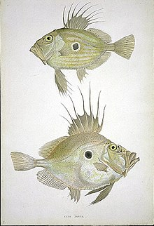 List Of Fish In Sweden Wikipedia