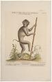 Macacus nemestrinus - 1700-1880 - Print - Iconographia Zoologica - Special Collections University of Amsterdam - UBA01 IZ20000043.tif