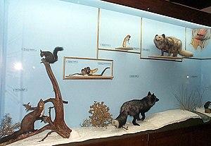Natural History Museum (Thessaloniki) - Image: Macedonian Museums 65 Fysikhs Istorias Thessalonikhs 283