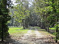 Magnolia Lane Plantation from River Road 2.JPG