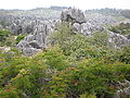 Major Stone Forest NE outer area 5.JPG