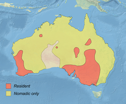 Malacorhynchus membranaceus distribution map.png
