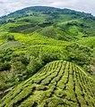 Malaysia - Cameron Highlands (26092722592).jpg