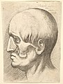 Male head in profile to left with muscles exposed MET DP823724.jpg
