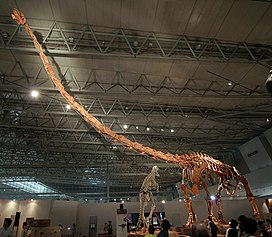 Mamenchisaurus in Japan.jpg