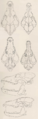 Mammals of northern Alaska on the Arctic slope (1956) Canis lupus & Canis lestes skulls.png