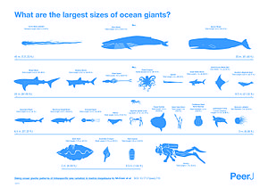 Largest organisms - Infographic showing the size of marine megafauna.