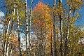 Marion Brooks Natural Area (5) (8064521764).jpg