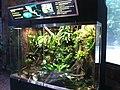 Maryland Zoo in Baltimore Golden frog exhibit.jpg