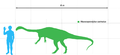 Massospondylus scale.png
