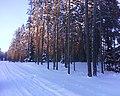 Mežs netālu no Ratkalna - panoramio.jpg