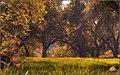 Meadow (145585419).jpeg