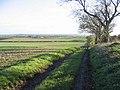 Merse farmland - geograph.org.uk - 278713.jpg