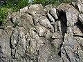 Metamorphosed pillow basalt (Ely Greenstone, Neoarchean, ~2.722 Ga; Rt. 169 roadcut just west of Ely, Minnesota, USA) 9 (21536183561).jpg