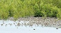 Migrasi Burung.jpg