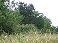 Mill Plantation - geograph.org.uk - 44603.jpg