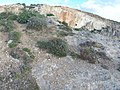 Mistra, St Paul's Bay, Malta - panoramio (22).jpg