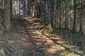 Moosburg Knasweg Forstweg 04042020 7388.jpg