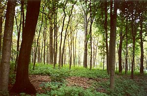 DuPage County, Illinois - A woodland ecosystem in the Morton Arboretum