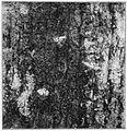 Moths of the British Isles Fig13.jpg