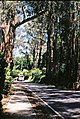 Mount Dandenong Tourist Road (yes, I've taken a lot of photos of this road!) (39491346662).jpg