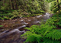 My Public Lands Roadtrip- Sandy River and Sandy Ridge Trail in BLM Oregon (18588069814).jpg
