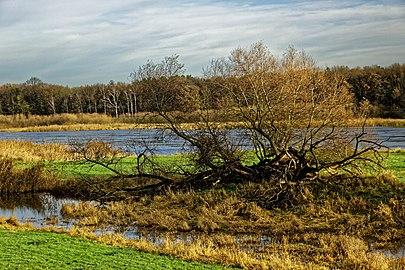 NSG Oderwiesen nördlich von Frankfurt (Oder) 1.jpg