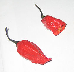 Naga Jolokia pepper.